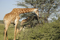 Safari Holiday to Botswana